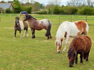 4 ponies (2)